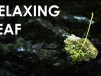 Relaxing Leaf - 2 Hour of Beautiful Nature Water Sounds For Sleep, Study / Расслабляющие звуки воды