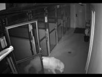 Pies ucieka ze szpitala dla zwierząt