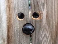 Ciekawski pieseł sąsiadów