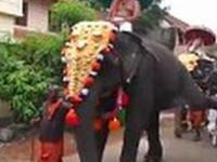 pamiętliwy słoń