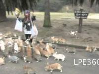 Atak głodnych królików