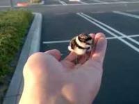 Dobry człowiek ratuje ptaszka i oddaje go rodzicom