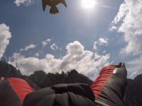 Sokół wędrowny ściga skoczka w wingsuicie