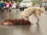 Une scène passionnante pour un chien qui ne veut pas se séparer de son ami