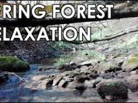 Spring Forest Relaxation - Sounds Of Nature, Sounds Of River for Sleep, Study, Relaxation