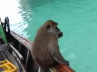Szalona małpa