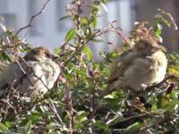 Ptaszki wygrzewają się na słoneczku