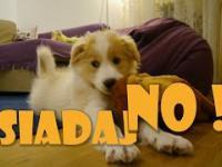 Jak Wytresować Psa ? MAMY NOWEGO PUPILA !