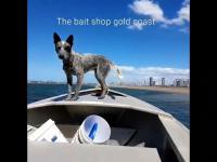 Australijski sposób na szybki spacer z psem