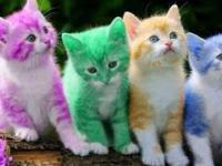 Śmieszne koty 10