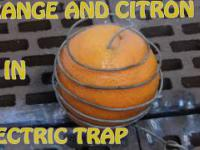 Orange and Citron in Electric Trap - New Experiment 4K MAY 2017