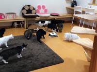 Koty wystraszone przez robo odkurzacz