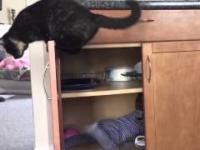 Kot zamyka dziecko w szafce