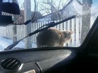 Kot odwalił kierowcy niezły numer
