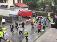 Kozy, krowy i owce przyłączyły się do zawodników biegu ulicznego