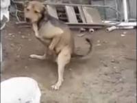 Pies ciapatych... Nie dosyć, że zboczeniec niewyżyty, to jeszcze strzela :p