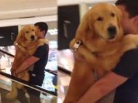 Kiedy pies boi się ruchomych schodów, więc od małego wozisz go na rękach