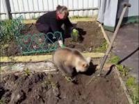 pies pomaga w ogródku