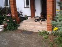 Rottweiler - ochrona domu 24h na dobę