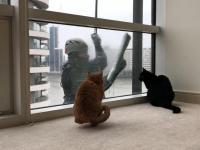 Koty uwielbiają zabawę z czyścicielem okien