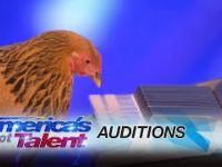 Kura gra hymn Stanów Zjednoczonych na keyboardzie