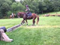 Koń, który bardzo boi się skakać
