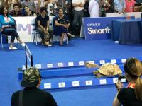 Żółw vs królik