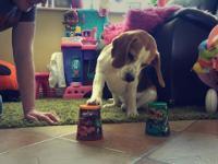 Mądry kudłaty uczy się gry w kubki