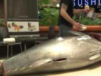 Tuńczyk w Sushi DO w Bielsku Białej
