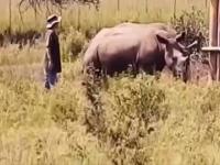 Ataki dzikich zwierząt