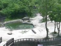 Mały słoń wpada do wody topiąc się