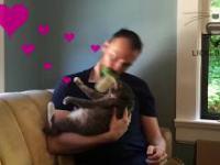 Najgłupszy gadżet do czesania kota