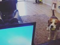 Ten pies nie lubi jak się go ignoruje