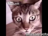 Śmieszne koty 2017 1