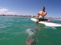 Potężna ośmiornica atakuje deskę surfingową