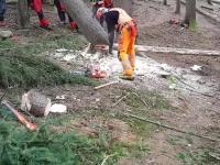 Stary drwal pokazuje uczniom ciekawą technikę powalania drzew