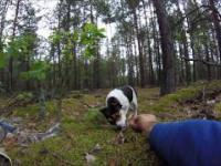 Mikro sunia porzucona w lesie w