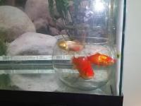 Psychologia ryb - eksperyment z podwójnym akwarium