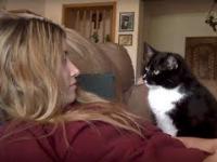 Kotek, który prosi o pieszczoty