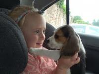 Wzruszająca reakcja dziecka na nowego szczeniaka w rodzinie