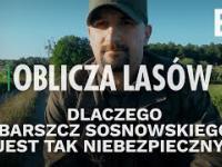 Dlaczego barszcz Sosnowskiego jest tak niebezpieczny? - Oblicza lasów 31
