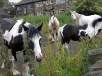podstawy języka polskiego dla koni