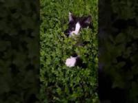 Zabawa z kotkami przyczajonymi w krzakach