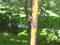 Something weird catch a fly (Coś dziwnego trzyma muchę )