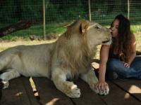 Kobieta i jej lwy