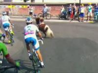 Malutki kucyk biegnie w peletonie Tour de Pologne