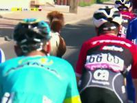 Malutki kucyk biegnie w peletonie :) | Tour de Pologne 2017
