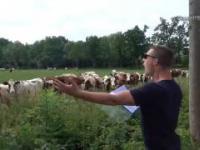 Zaklinacz krów
