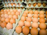 Jajecznica z 300 jajek