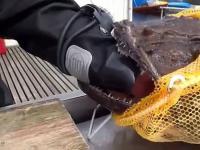 Rosjanin kontra ryba z piekeł